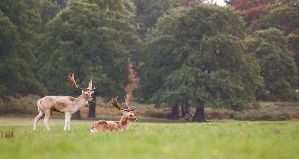 deer-linkroundup