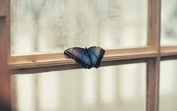 Butterfly resting on a window
