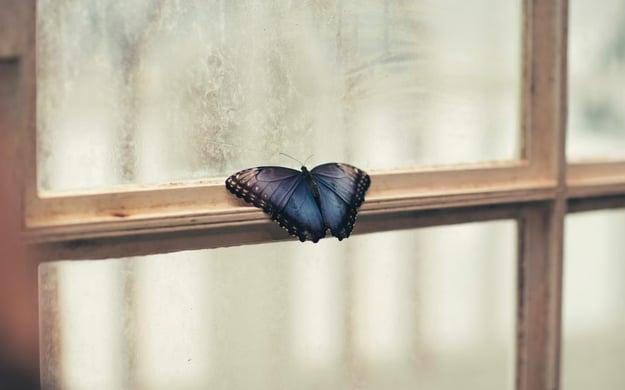 Butterfly resting on a window